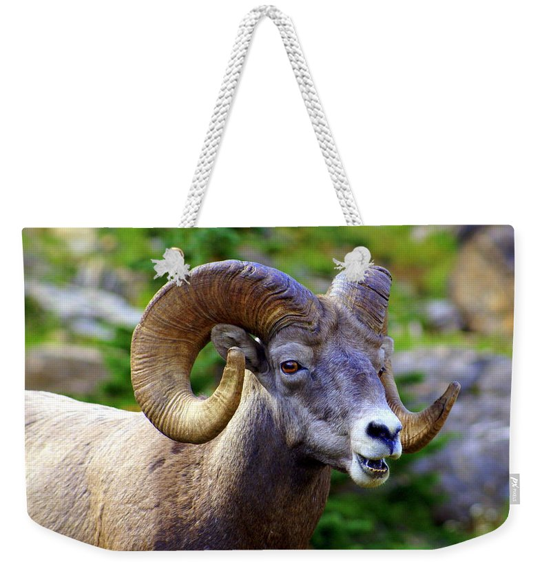 Big Horn Sheep Weekender Tote Bag featuring the photograph Bighorn 2 by Marty Koch
