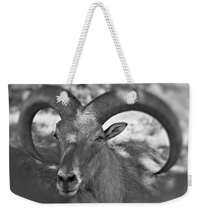 Antelope Weekender Tote Bag featuring the photograph Bighorn by Douglas Barnard