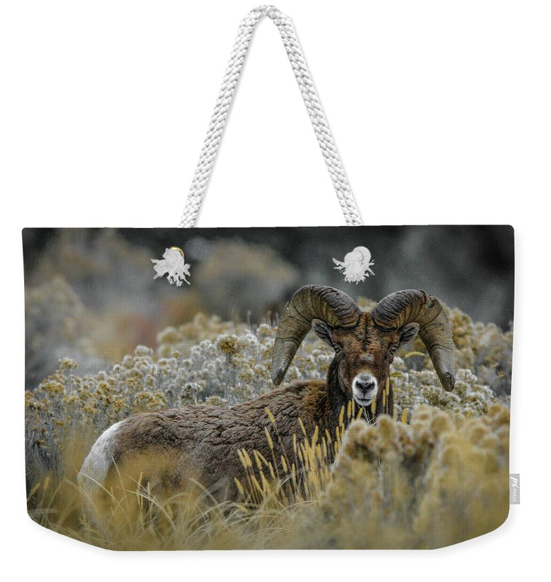 Bighorn Sheep Weekender Tote Bag featuring the photograph Bighorn in Sage by Jason Brooks