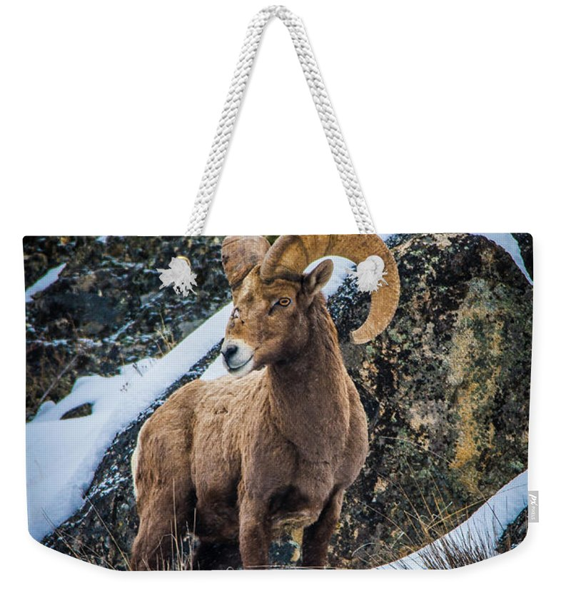 Bighorn Sheep Weekender Tote Bag featuring the photograph Bighorn Ram 2 by Jason Brooks