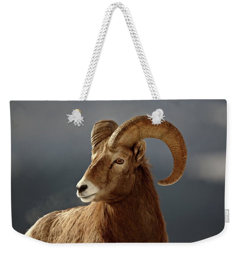 Rocky Mountain Weekender Tote Bag featuring the digital art Bighorn Sheep In Winter by Mark Duffy