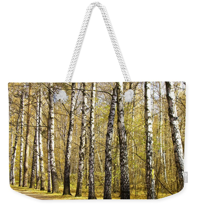 Alley Weekender Tote Bag featuring the photograph Birch Alley In Autumn by Irina Afonskaya