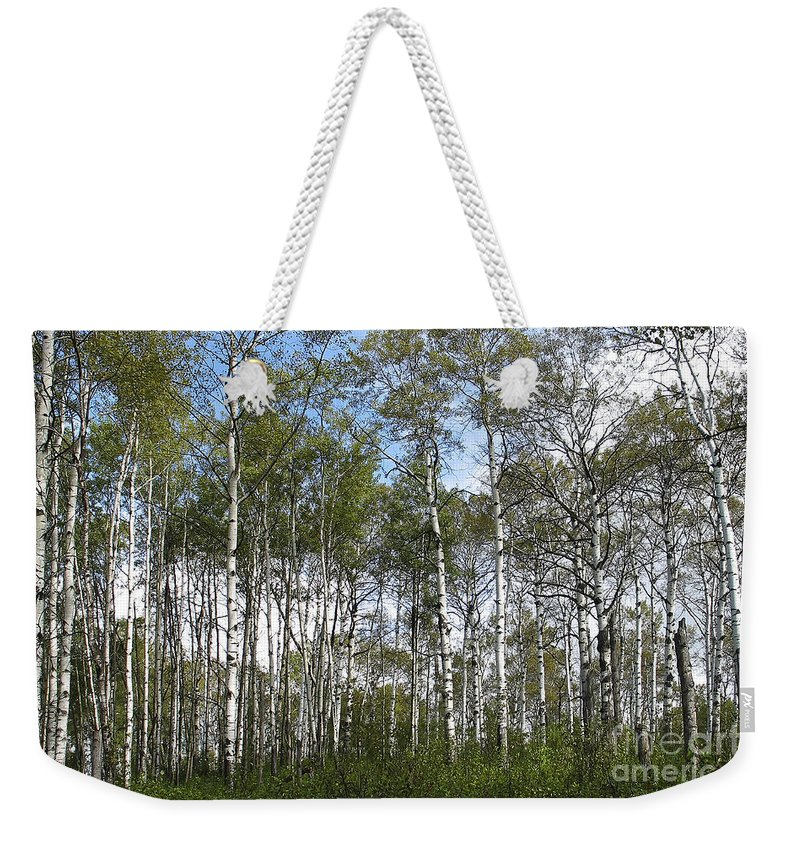 Forest Weekender Tote Bag featuring the photograph Birch Forest by Teresa Zieba