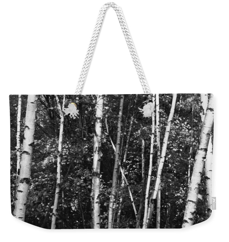 Autumn Weekender Tote Bag featuring the photograph Birch Trees by Phill Doherty