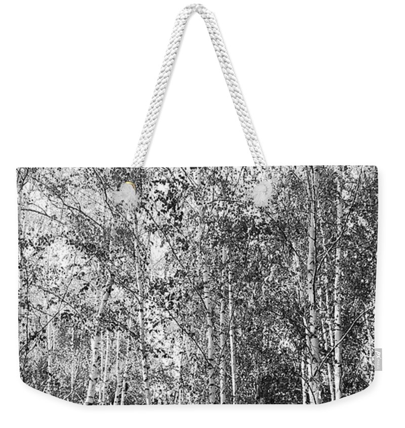Art Weekender Tote Bag featuring the photograph Birch Trees1 by Svetlana Sewell