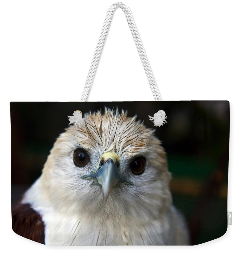 Bird Weekender Tote Bag featuring the photograph Bird by George Cabig