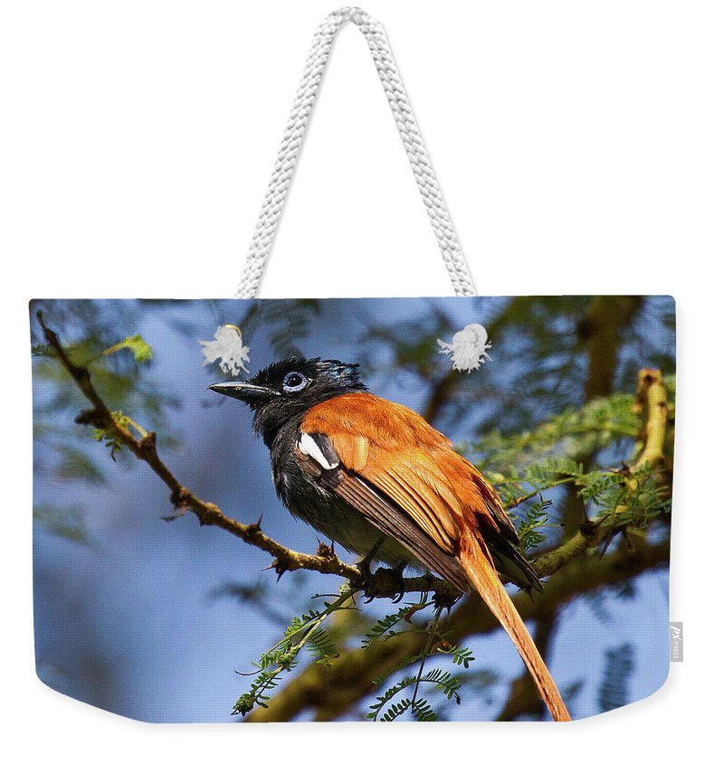 Wing Weekender Tote Bag featuring the photograph Bird In High Ground by Janet Chung