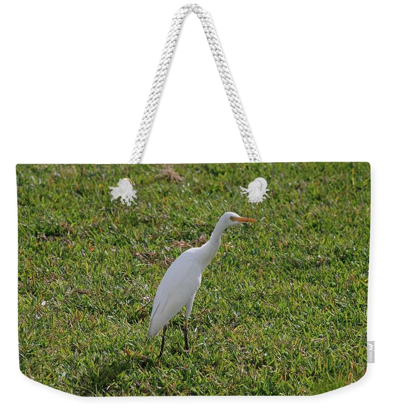 White Bird Weekender Tote Bag featuring the photograph Bird Is The Word by Rob Hans