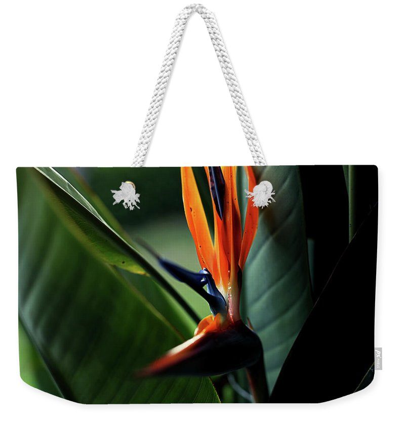 Bird Of Paradise Weekender Tote Bag featuring the photograph Bird Of Paradise by Heather Strong