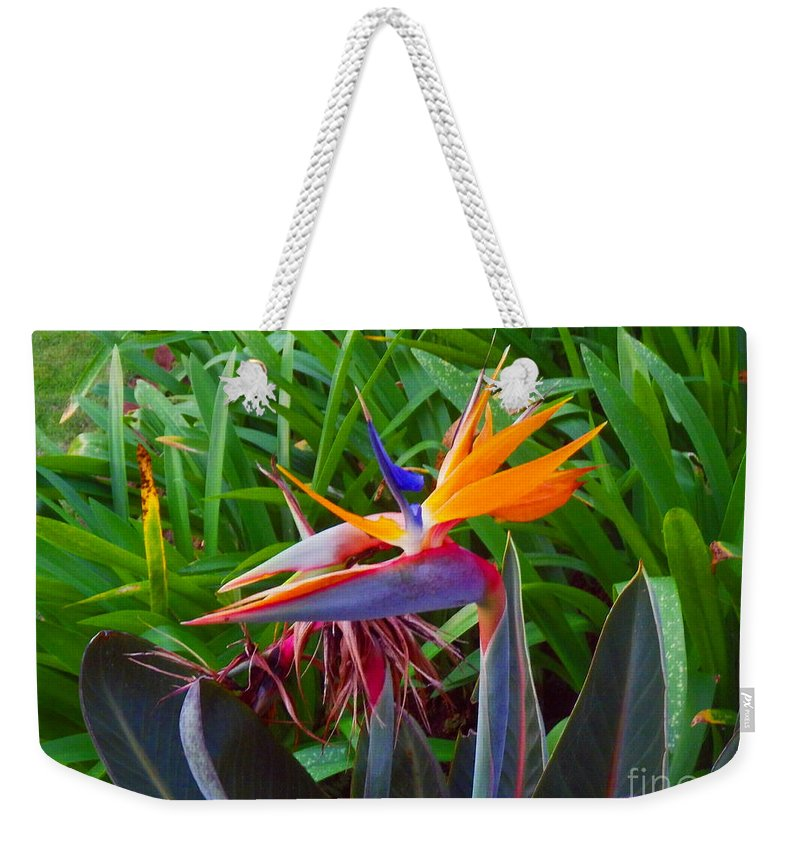 Bird Paradise Flower Costa Rica Maui Hawaii Weekender Tote Bag featuring the photograph Bird Of Paradise Kalon by John Nichols