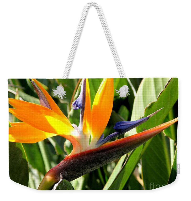 Bird Of Paradise Weekender Tote Bag featuring the photograph Bird Of Paradise by Mary Deal