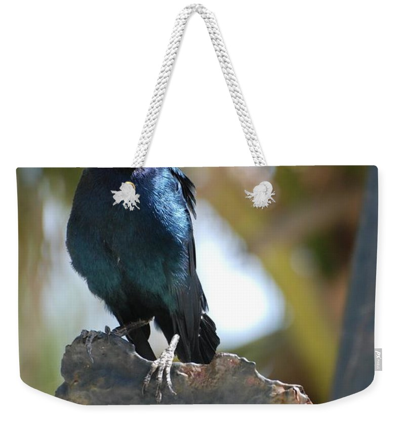 Bird Weekender Tote Bag featuring the photograph Bird On An Anchor by Rob Hans