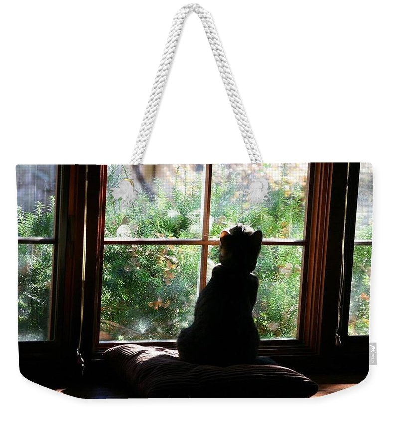 Cat Weekender Tote Bag featuring the photograph Bird Patrol I by Pattie Frost