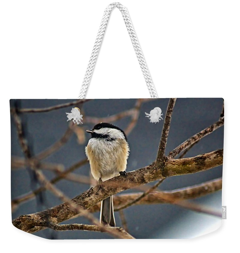 Alone Weekender Tote Bag featuring the photograph Bird Song by Catherine Melvin