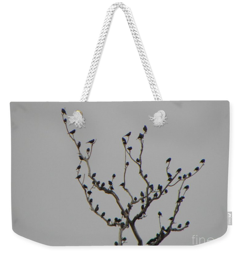 Migrating Birds Stop Off For A Rest. Weekender Tote Bag featuring the photograph Bird Stop by C Zajicek