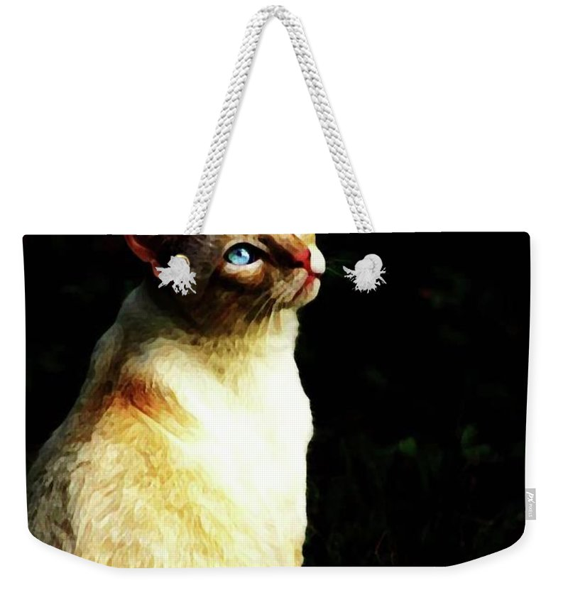Cat Weekender Tote Bag featuring the photograph Bird Watcher by Kim Henderson