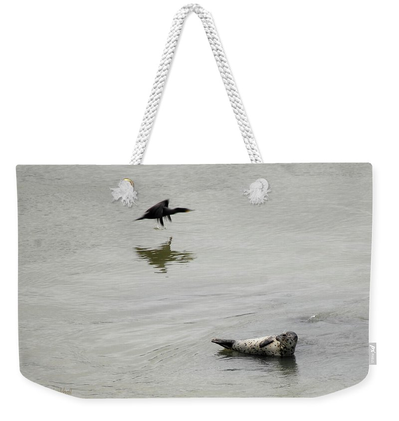 Seal Weekender Tote Bag featuring the photograph Bird Watching by Donna Blackhall