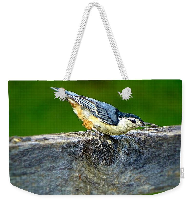 Bird With The Seed Weekender Tote Bag featuring the photograph Bird With The Seed by Lilia D