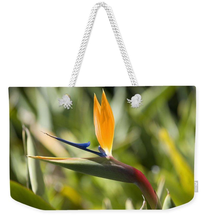 Flowers Weekender Tote Bag featuring the photograph Birdie by Kelley King