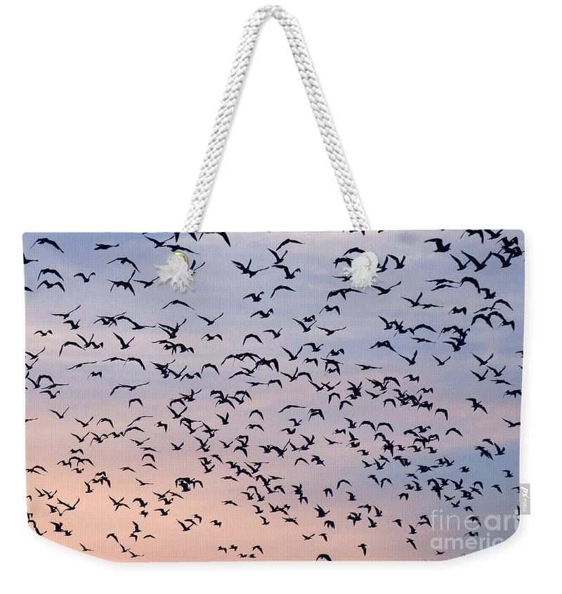 Numerous Weekender Tote Bag featuring the photograph Birds A Flock Of Seagulls by John Harmon