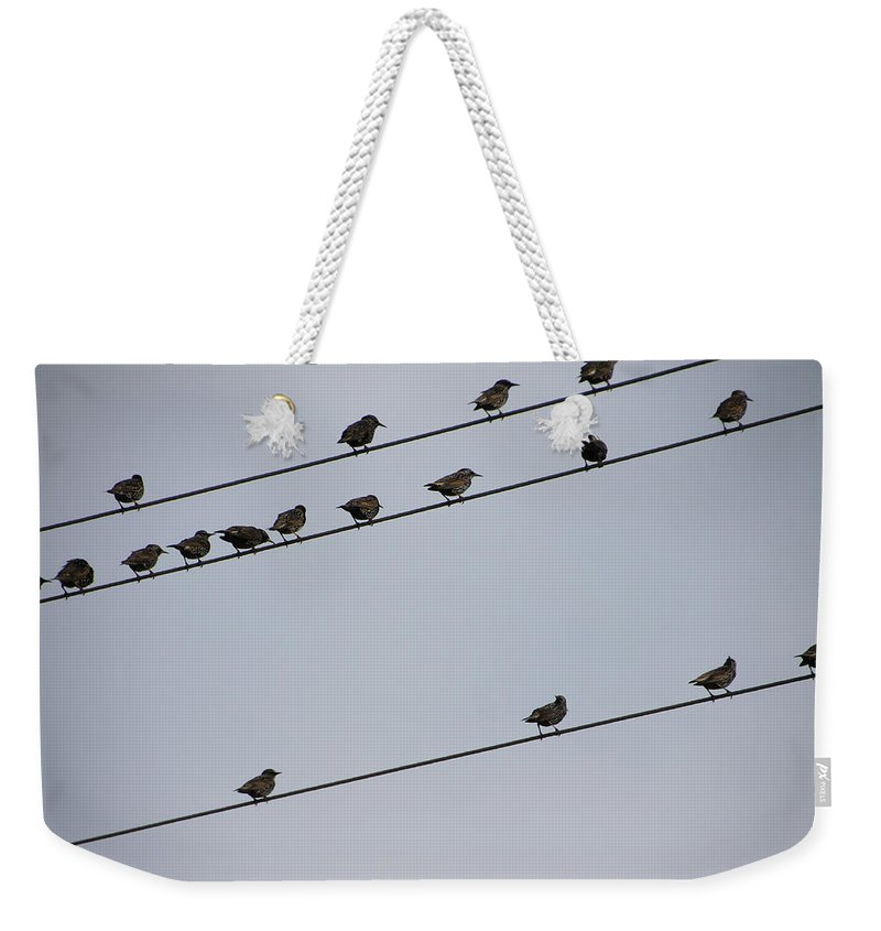 Bird Weekender Tote Bag featuring the photograph Birds On A Powerline by Laura Martin