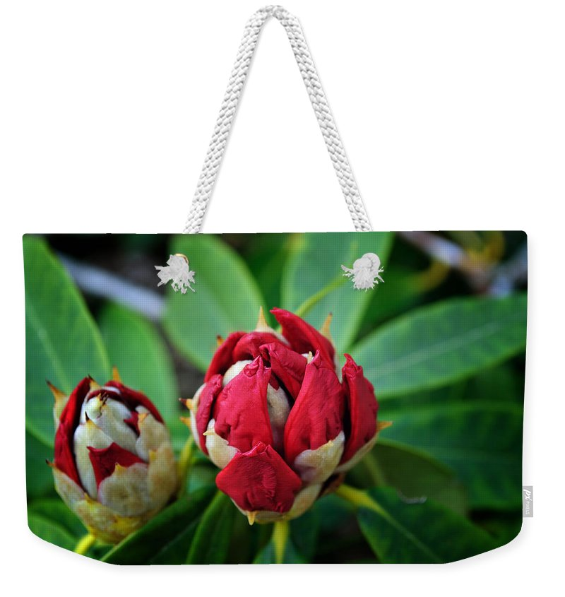 Rhododendron Weekender Tote Bag featuring the photograph Birth Of A Rhoddy by Tikvah's Hope