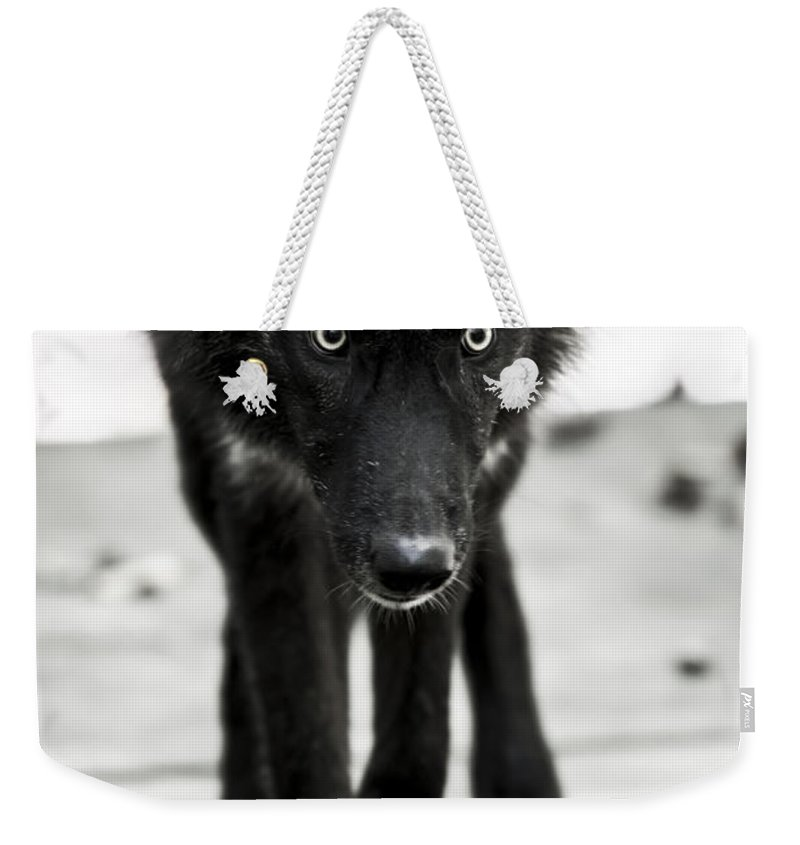 Bishop Wolf Weekender Tote Bag featuring the photograph Bishop Wolf by Tracy Winter