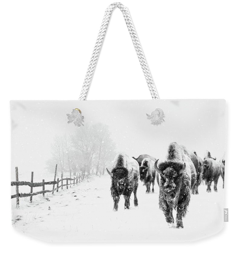 Bison Weekender Tote Bag featuring the photograph Bison On The Run by Andrea Kollo