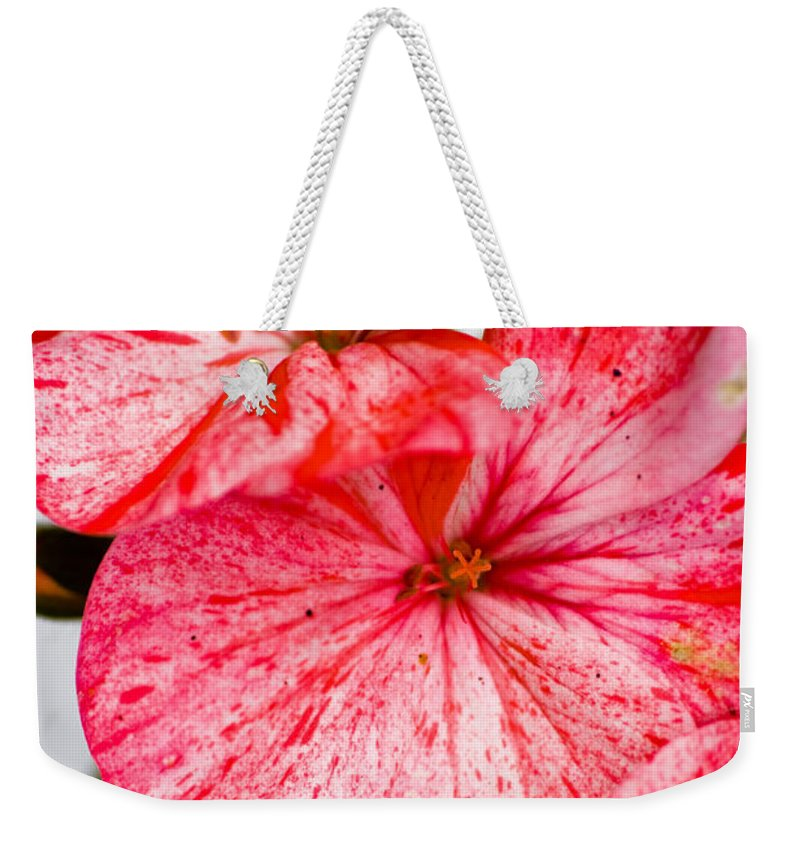 Bizzy Lizzy Weekender Tote Bag featuring the photograph Bizzy Lizzy by Brian Roscorla