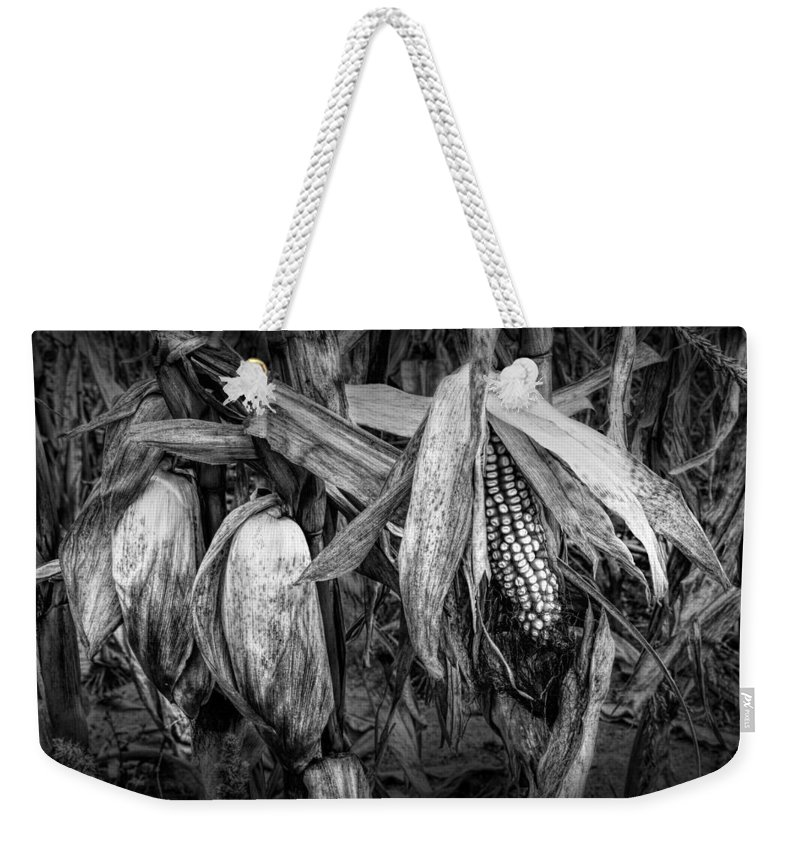 Corn Weekender Tote Bag featuring the photograph Black And White Ear Of Corn On The Stalk by Randall Nyhof