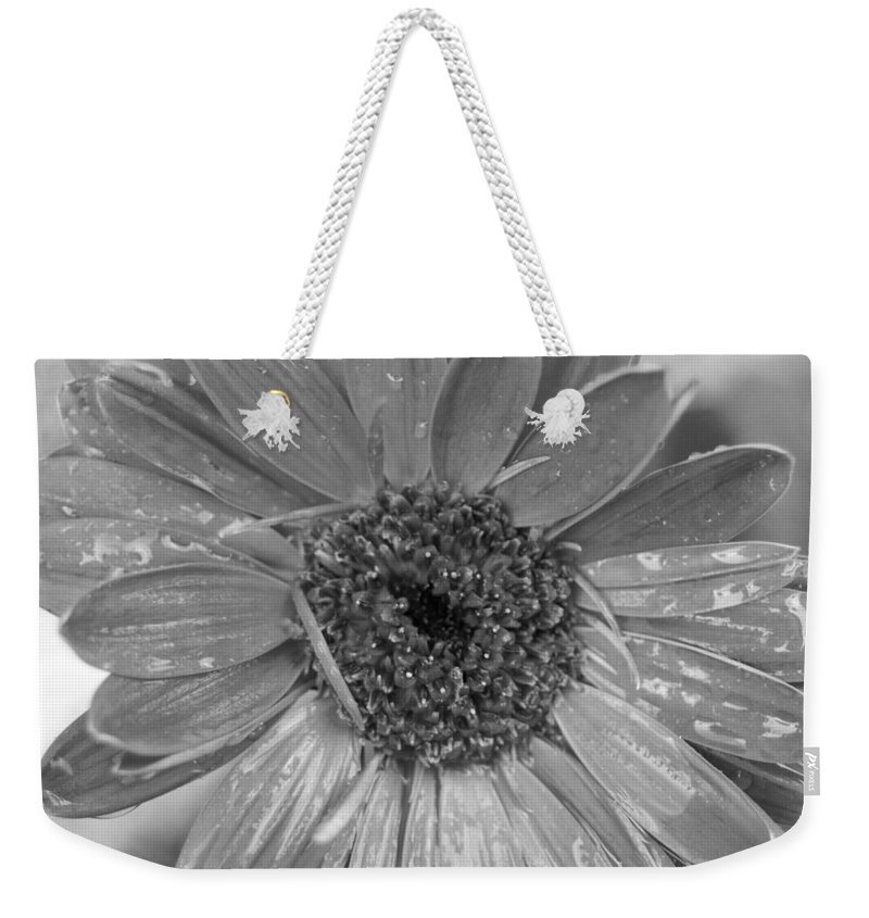 Gerber Daisy Weekender Tote Bag featuring the photograph Black And White Gerbera Daisy by Amy Fose