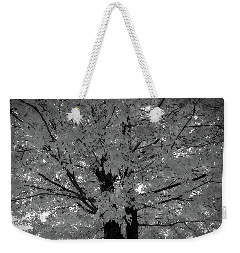 Autumn Weekender Tote Bag featuring the photograph Black And White Golden Tree by Aimee L Maher ALM GALLERY