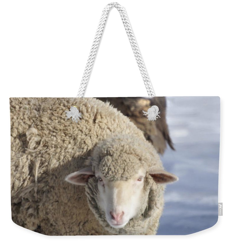Sheep Weekender Tote Bag featuring the photograph Black And White by Heather Coen