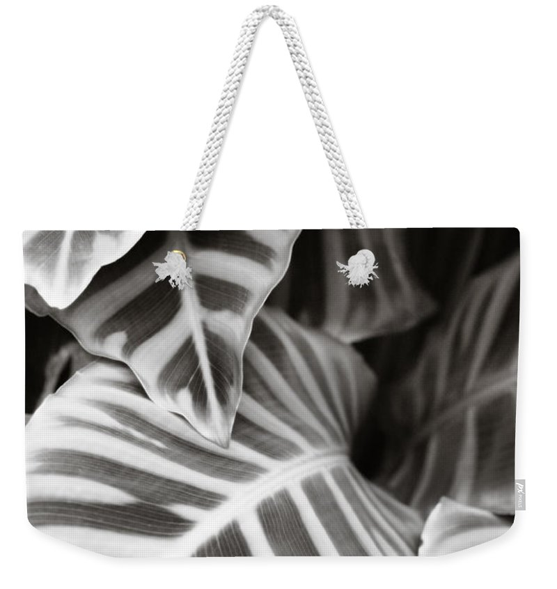 Black Weekender Tote Bag featuring the photograph Black And White Leaves by Marilyn Hunt