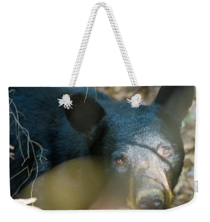 Black Bear Weekender Tote Bag featuring the photograph Black Bear Oh My by Betsy Knapp