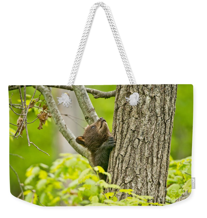 Black Bear Weekender Tote Bag featuring the photograph Black Bear Pictures 82 by World Wildlife Photography