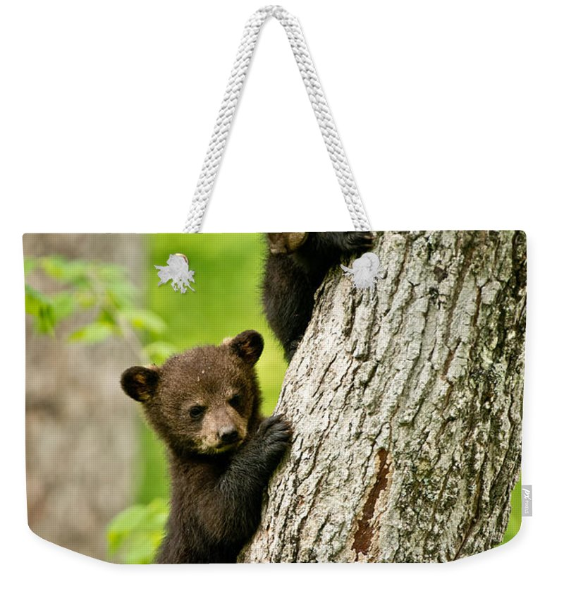 Black Bear Weekender Tote Bag featuring the photograph Black Bear Pictures 84 by World Wildlife Photography