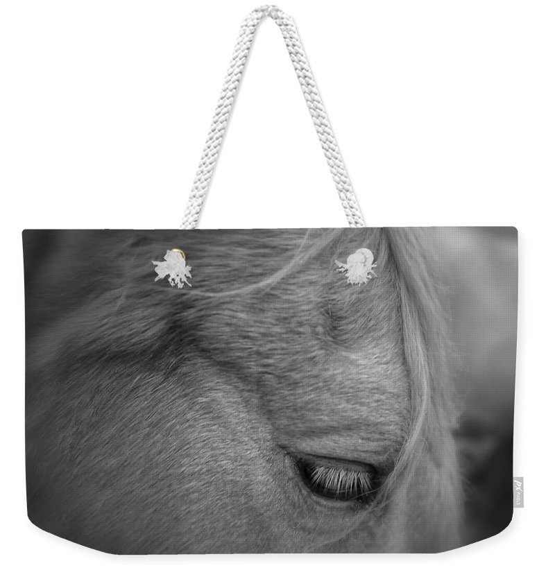 Animal Weekender Tote Bag featuring the photograph Black Beauty by Donna Blackhall