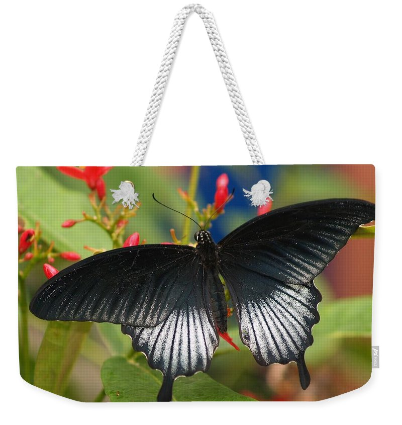 Butterfly Weekender Tote Bag featuring the photograph Black Beauty by Gaby Swanson