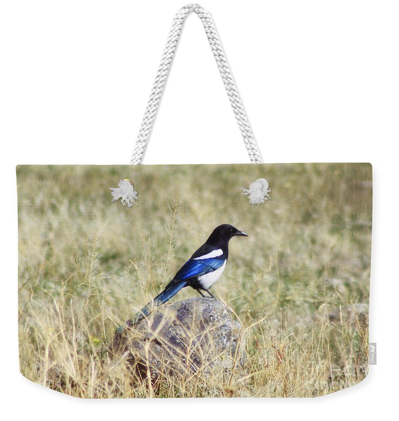 Bird Weekender Tote Bag featuring the photograph Black-billed Magpie by Janie Johnson