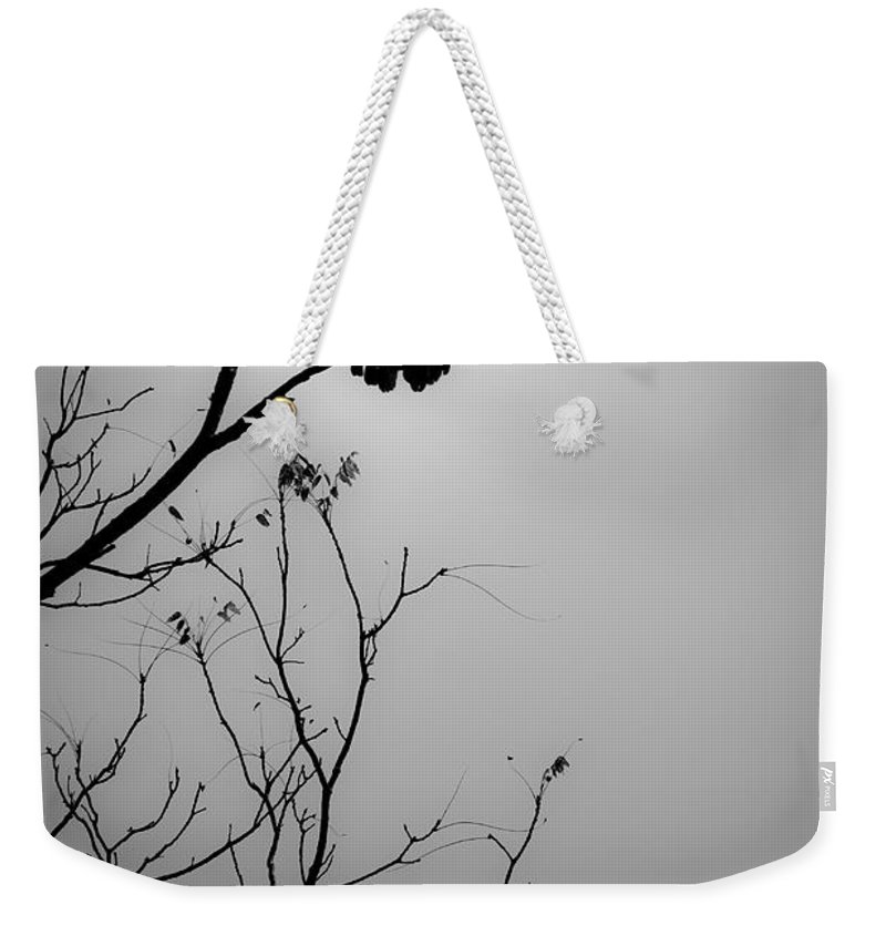 Black Weekender Tote Bag featuring the photograph Black Buzzard 6 by Teresa Mucha