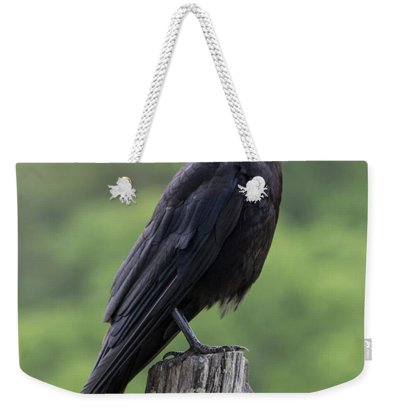Animal Weekender Tote Bag featuring the photograph Black Crow Pearched On A Post by Benjamin King
