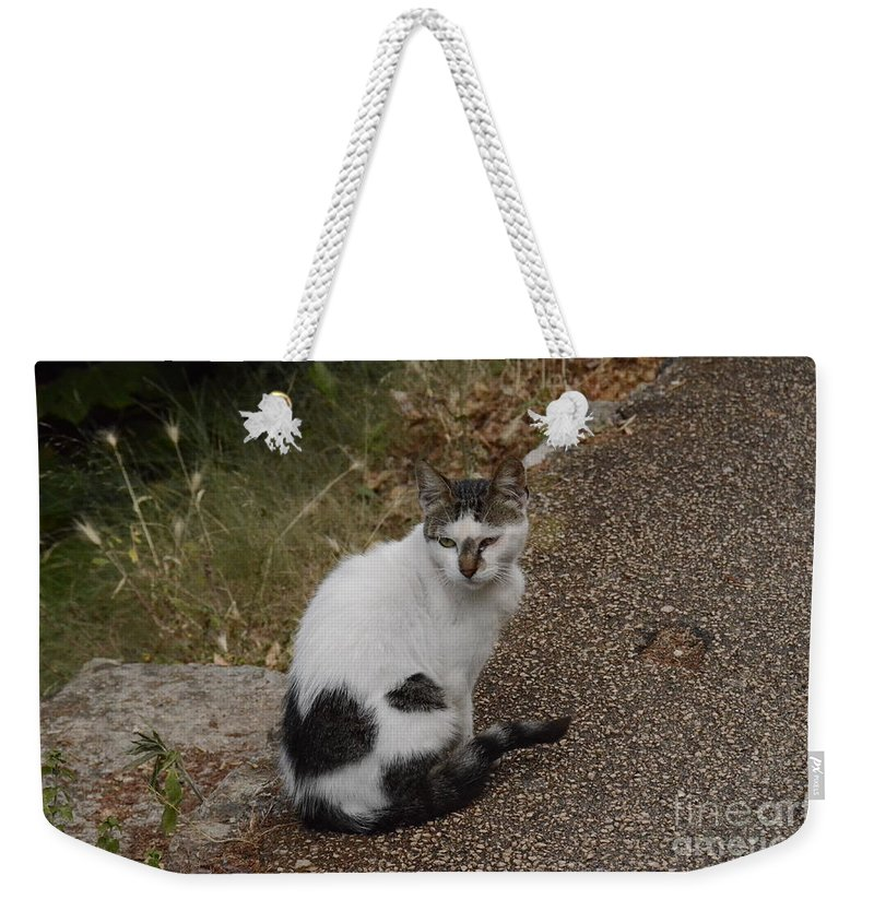 Cat Weekender Tote Bag featuring the photograph Black Heart Cat by Elaine Berger