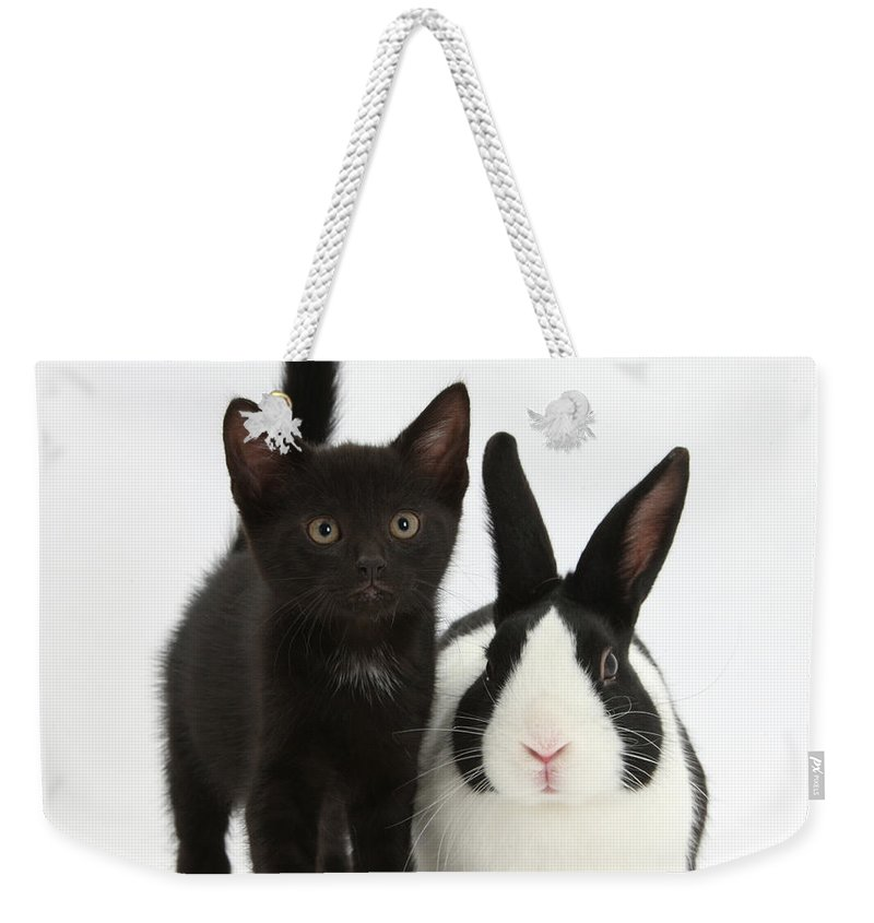 Nature Weekender Tote Bag featuring the photograph Black Kitten And Dutch Rabbit by Mark Taylor