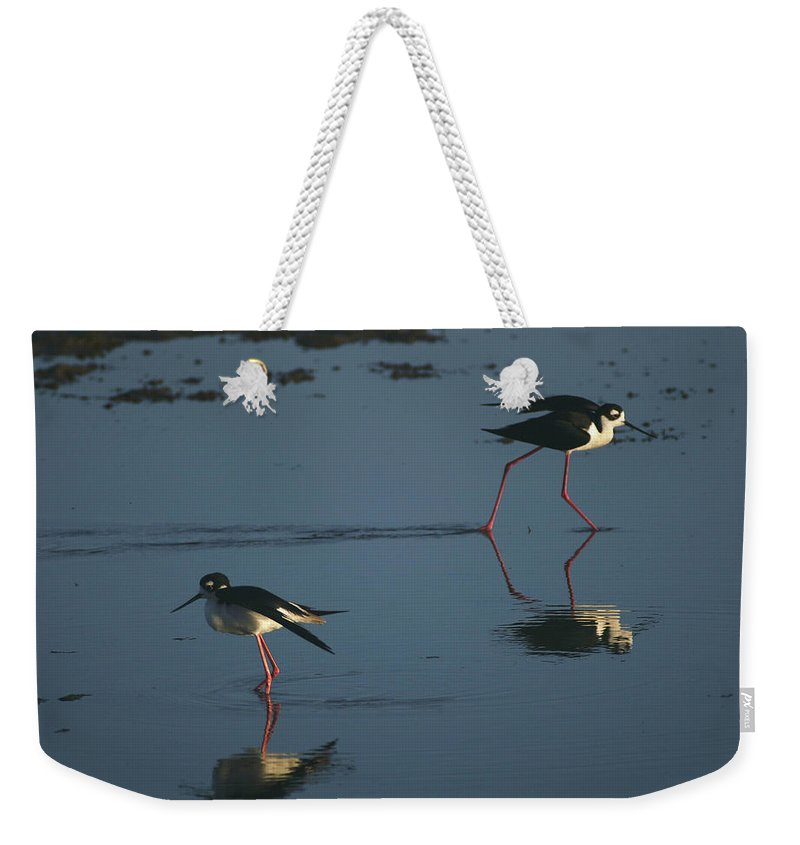 Birds Weekender Tote Bag featuring the photograph Black-necked Stilts - California Central Coast by Jim Bourne