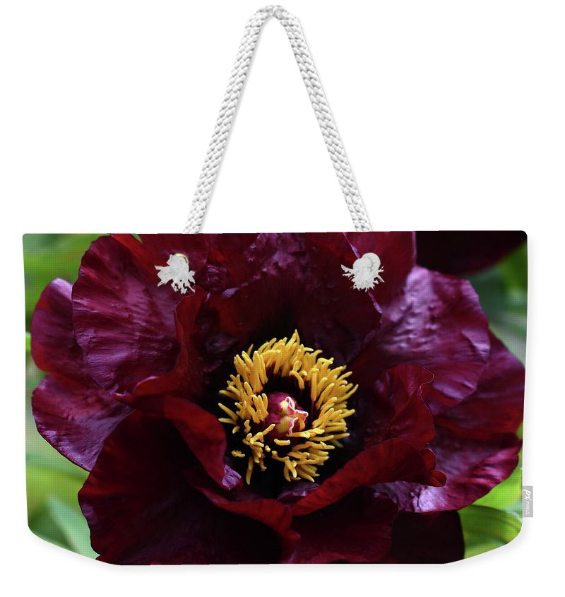 Peony Weekender Tote Bag featuring the photograph Black Pirate 2121 by Terri Winkler
