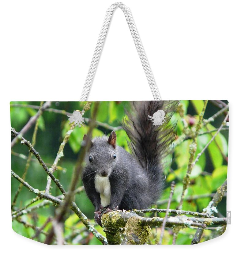 Animal Weekender Tote Bag featuring the photograph Black Squirrel In The Cherry Tree by Valerie Ornstein