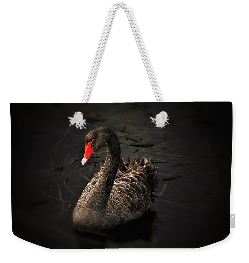 Birds Weekender Tote Bag featuring the photograph Black Swan by Patti Mayer