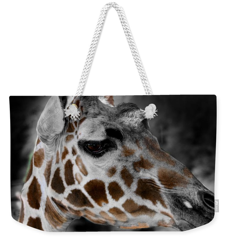 Giraffe Weekender Tote Bag featuring the photograph Black White And Color Giraffe by Anthony Jones