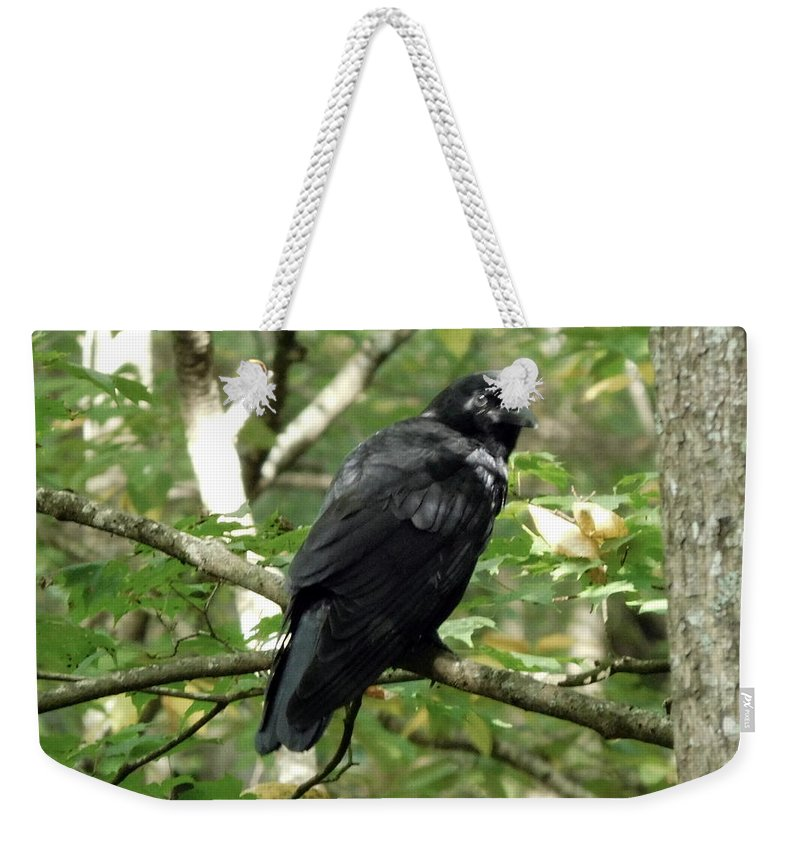 Bird Weekender Tote Bag featuring the photograph Blackbird by Barb Montanye Meseroll